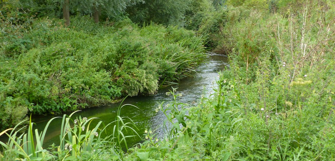 Water Vole Habitat and Management